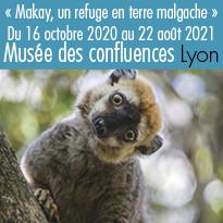 L'exposition Makay au musée des confluences à Lyon