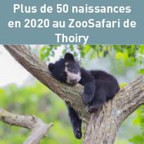 Au ZooSafari de Thoiry, Plus de 50 naissances en 2020