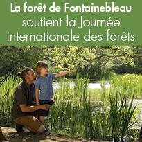 La forêt de Fontainebleau soutient la Journée internationale des forêts
