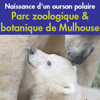 Naissance<br>d'un ourson polaire au<br>Parc zoologique<br>& botanique<br>de Mulhouse