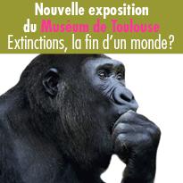 Nouvelle exposition du Muséum de Toulouse