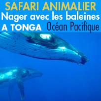 Safari animalier,<br>Nager<br>avec les baleines<br>à Tonga