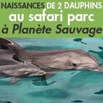 Naissances<br>exceptionnelles<br>de 2 dauphins<br>à laCité Marinedu parc