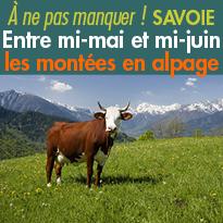 Entre mi-mai et mi-juin<br>montées en alpage<br>Savoie