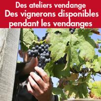 Expérience Vendanges<br>avec les Vignerons<br>Indépendants<br>de France
