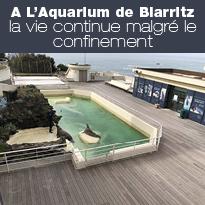L'Aquarium de Biarritz, la vie continue malgré le confinement