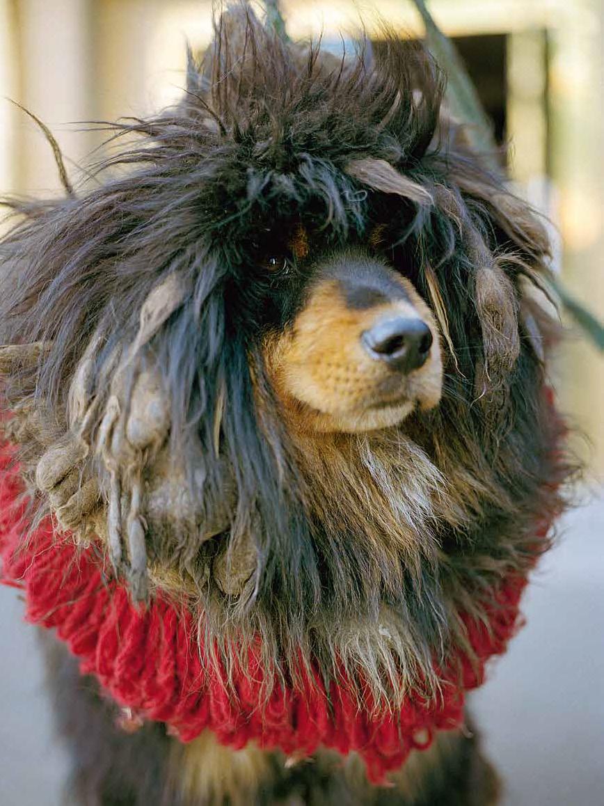Des chiens et des hommes for Salon des chiens