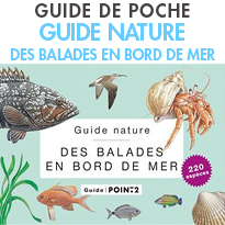 Guide nature<br>des balades en bord de mer