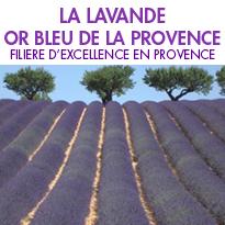 La lavande <br>or bleu de la Provence