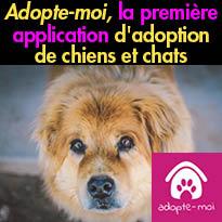 Adopte-moi,<br>la première application<br>d'adoption de chiens et chats