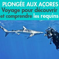 Plonger avec les requins<br>peau bleu<br>des Açores