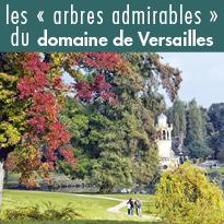 Découvrez les « arbres admirables » du domaine de Versailles de chez vous