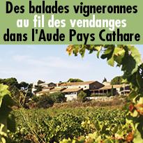Des balades<br>vigneronnes<br>au fil des vendanges<br>dans l'Aude (11)