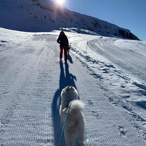 cani crosscountry skiing
